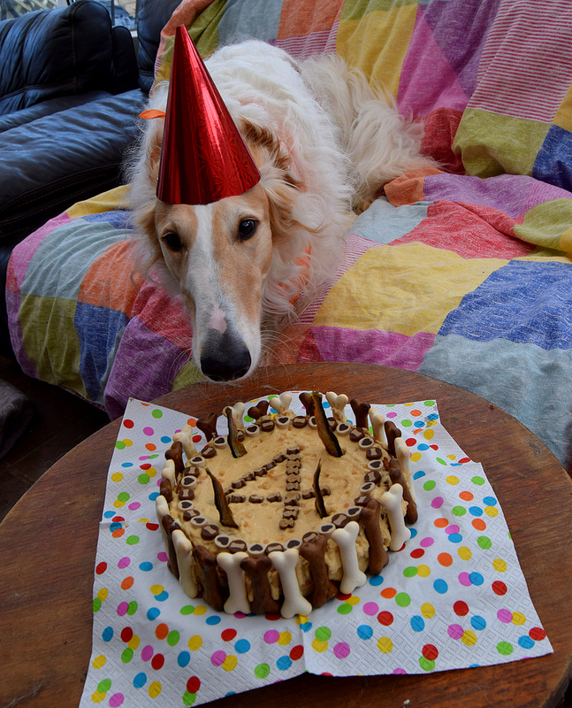 Simple Grain Free Birthday Cake Recipes For Dogs Pet Forums Community