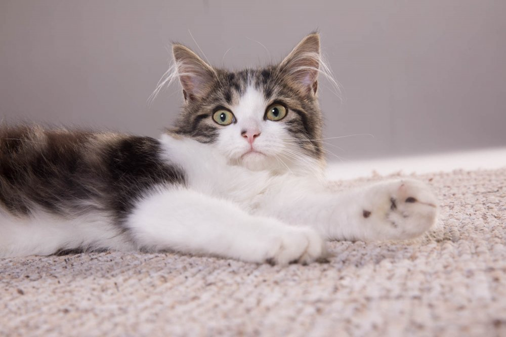 Angel Kitten2825.jpg