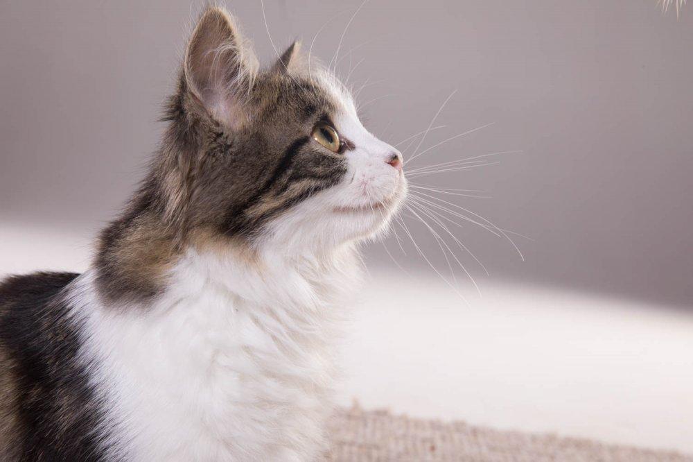 Angel Kitten2837.jpg