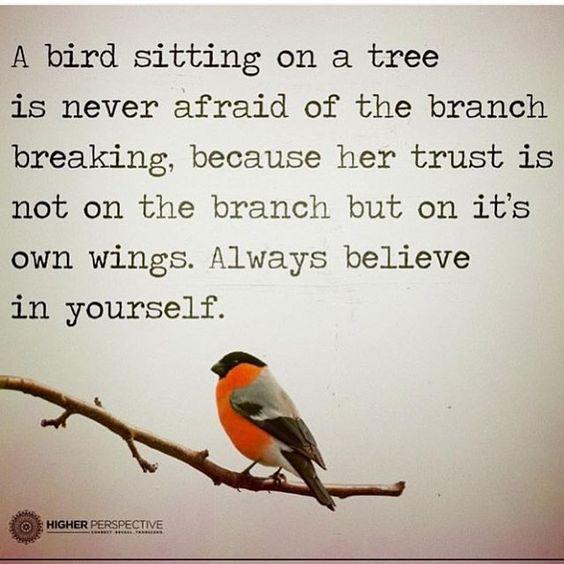 Bird wing.jpg