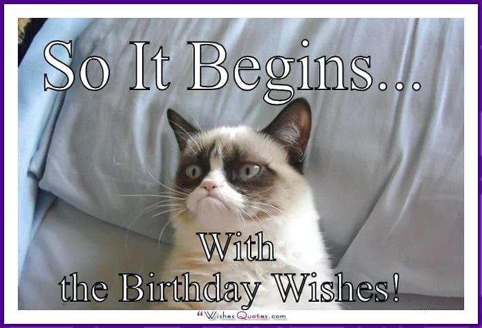 Birthday Memes Cats Funny 03