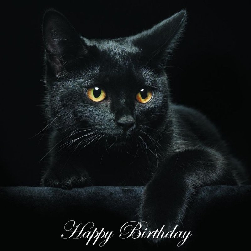 black cat on black birthday.jpg