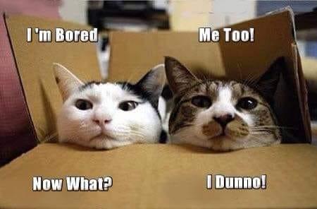 bored cats.jpg
