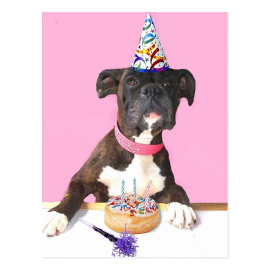 Boxer birthday2.jpg