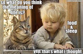 cat and kid.jpg