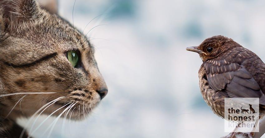 cat-bird1.jpg