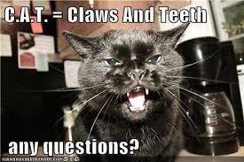 cat equals.jpg
