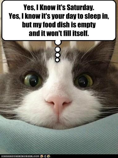 cat food dish.jpg