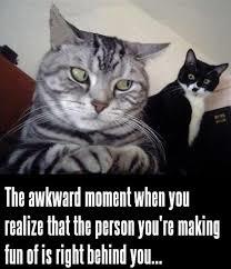 cat meme1.png