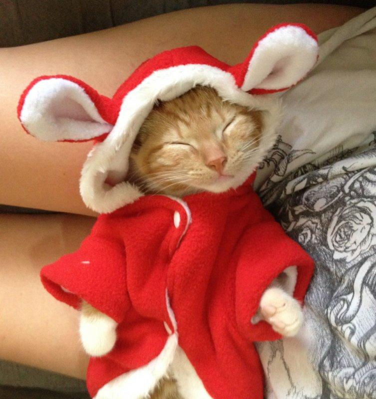 CAT SLEEPS3.jpg