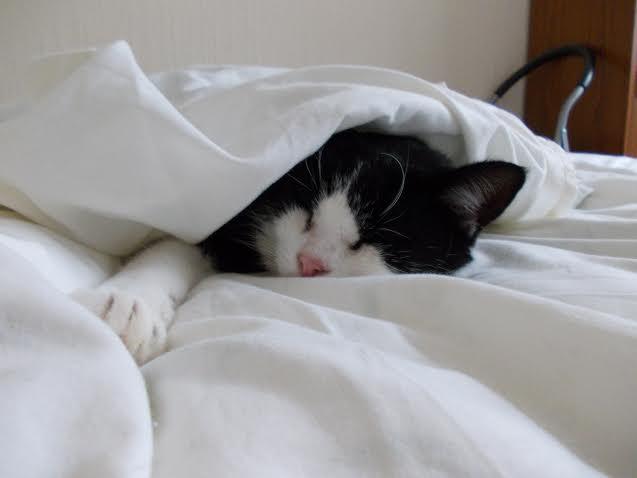 Charlie in bed2.jpg