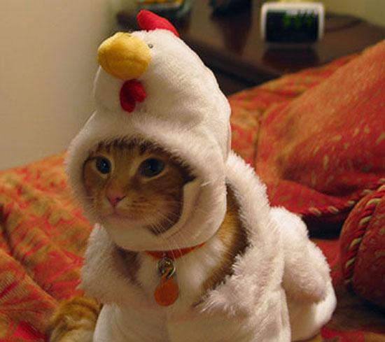 Chicken Toppy.jpg