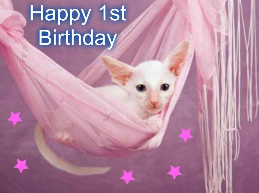Cosmo birthday.jpg