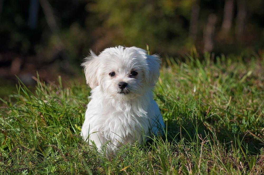 dog-1123016_1920.jpg