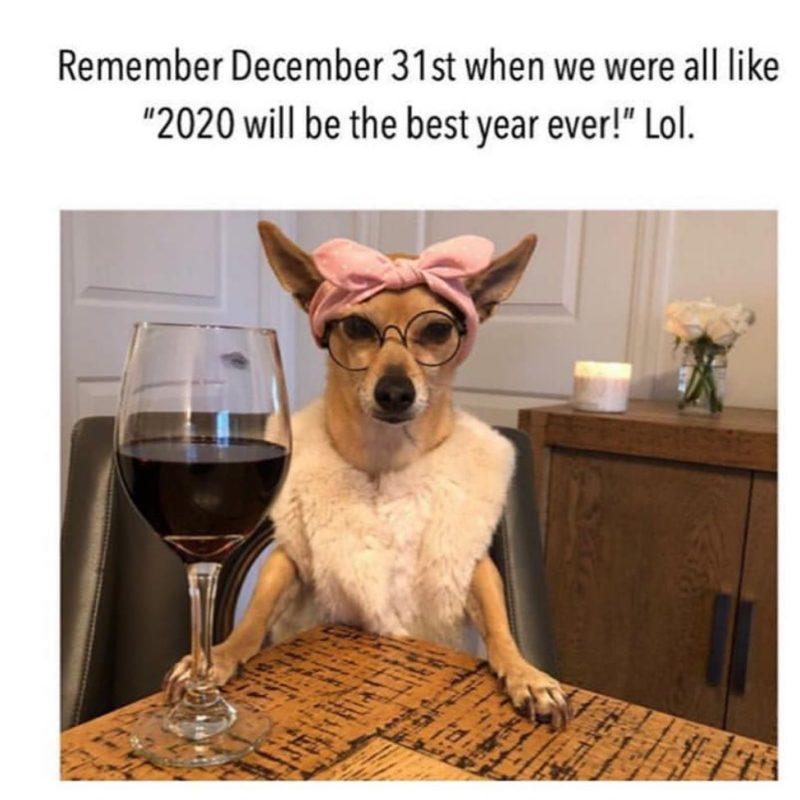DOG 2020.jpg