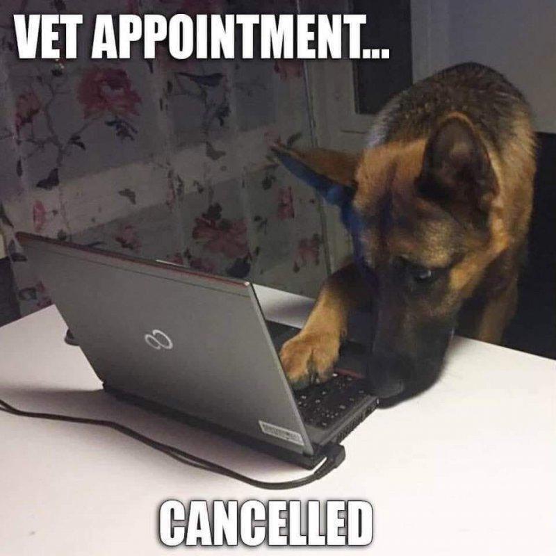 Dog and vet.jpg