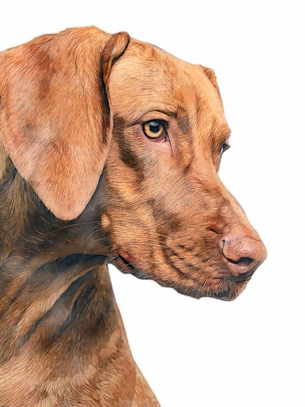 example-dog-2-small.jpg