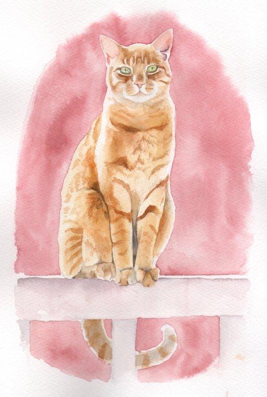 Ginger cat copy.jpg