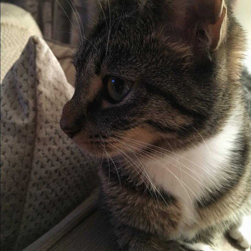 Black Lump On Cat S Neck