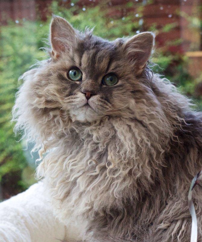 Best Brush For Long Haired Cats Uk