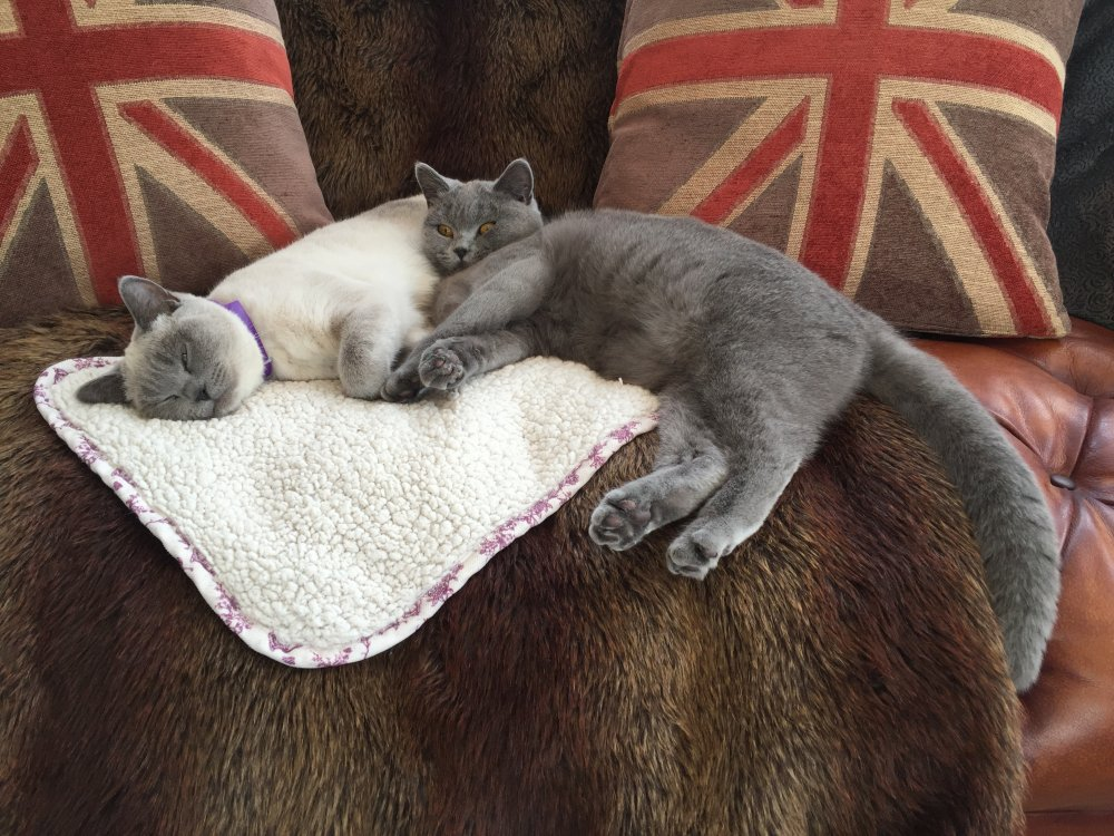 safe essential aromatherapy oils to diffuse with cats pet forums community. Black Bedroom Furniture Sets. Home Design Ideas