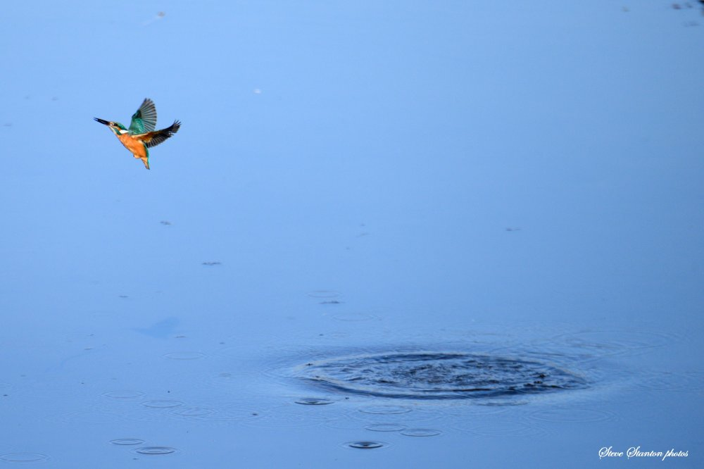 kingdive3.jpg