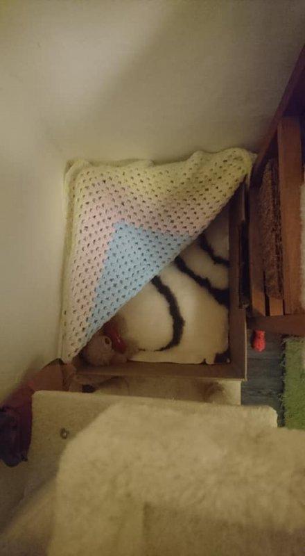 Kittening Spot.jpg