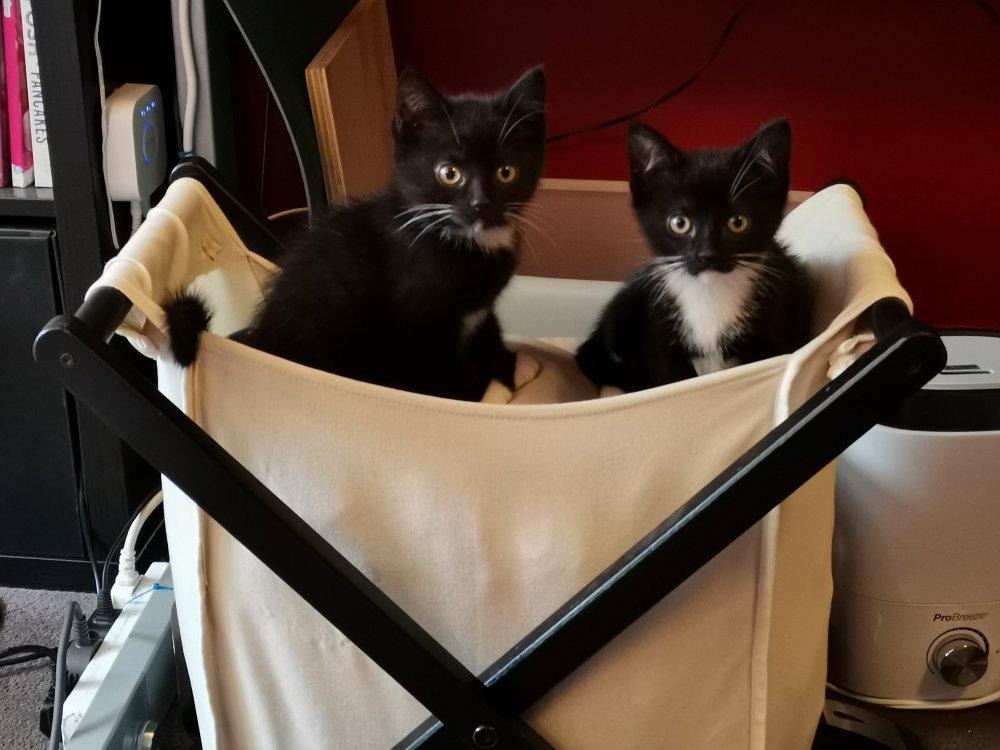 kittens-in-washbasket.jpg