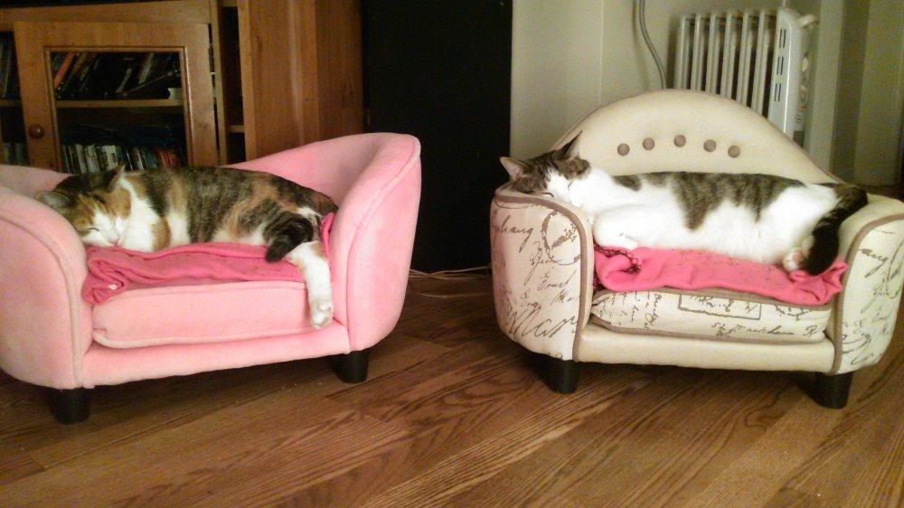KittyRustySleepingTVRoom.jpg