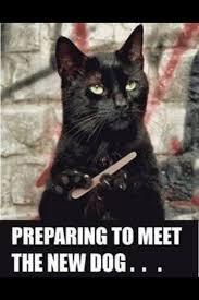 preparing to meet.jpg