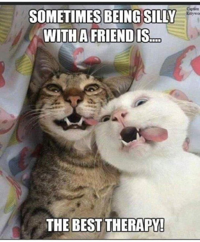 SILLY FRIEND.jpg