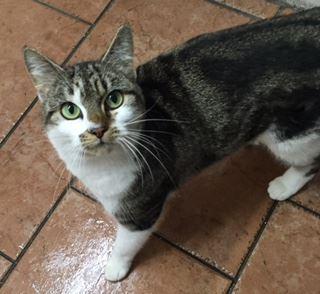 Stolen cat.jpg
