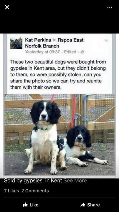 Stolen dogs.jpg