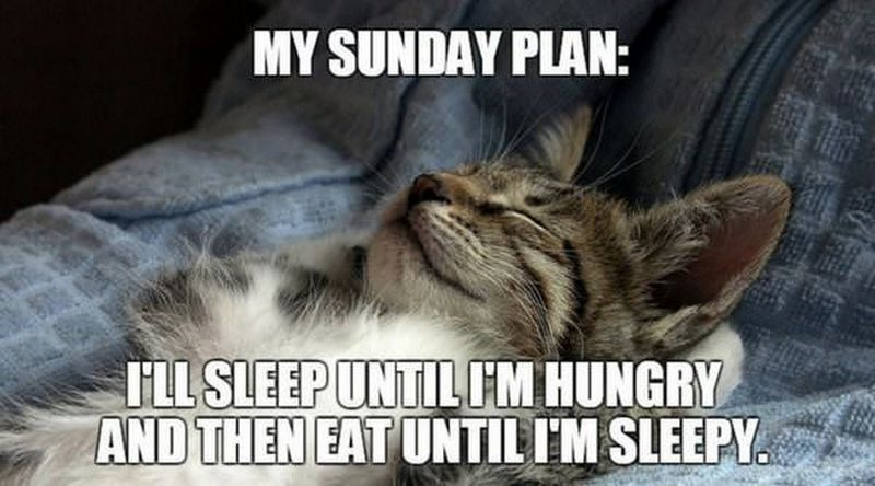 Sunday cat.jpg