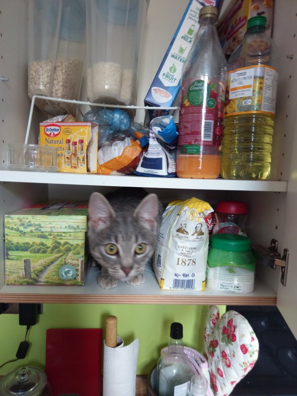 tilly in a cupboardsmall.jpg